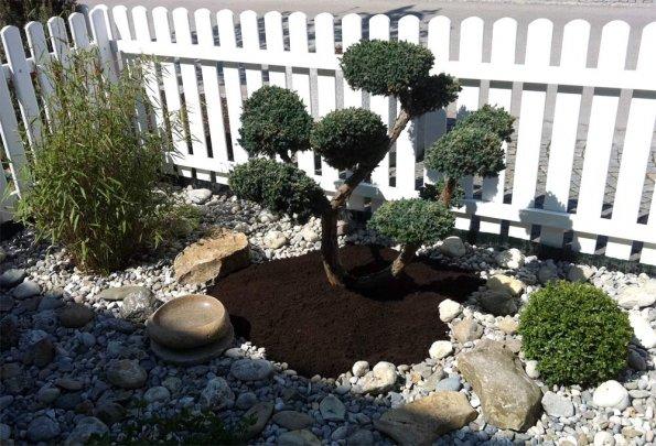 arbeitsbeispiele pflegen wacholder als bonsai. Black Bedroom Furniture Sets. Home Design Ideas